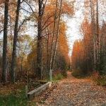 Carretera del bosque caduco