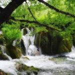 A green green forest cascade