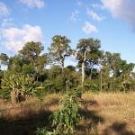 African heat landscape