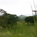 Captured grasslands behind the bushes