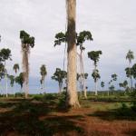 Landscape of randomly set trees