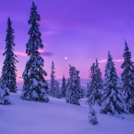 Like a snowy purple sunset in the heavens
