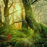 The yellow sun rises in the magic forest