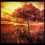 A bike under a tree