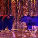 Colour fell in the bear woods