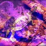Deep purple turtle
