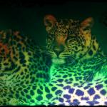 Neon cheetahs