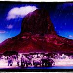 Rain in the wild Africa