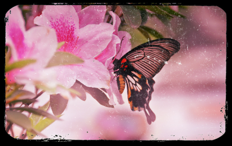 The flower meets the butterfly