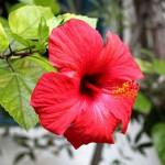 Flor roja en patio de Córdoba