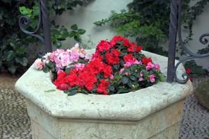 Flores pozo patio Córdoba