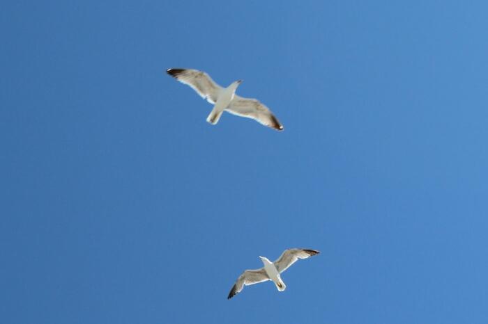 wpid-gaviotas-seagull-autor-manuel-ramallo-004.jpg.jpeg