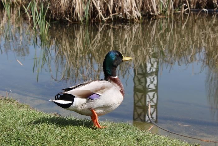 wpid-patos-rio-minho-img_2819-ourense-manuel-ramallo.jpg.jpeg