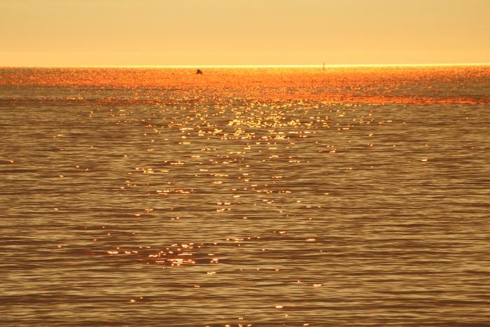 wpid-playa-america-autor-manuel-ramallo-27.jpg.jpeg