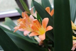 Flores naranja interior