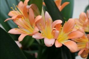 Flores naranja planta verde interior