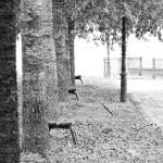 Parque en otoño en Galicia