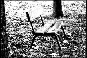Banco de madera en parque  en blanco y negro B/N B/W