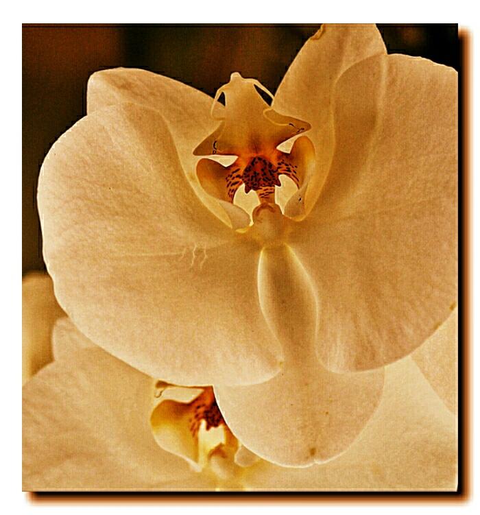 wpid-orquideas-autor-manuel-ramallo-0004.jpg.jpeg
