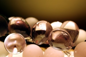 Doradas Uvas de cristal de Murano al contraluz