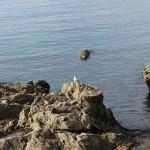 Gaviota observando el mar en Asturias