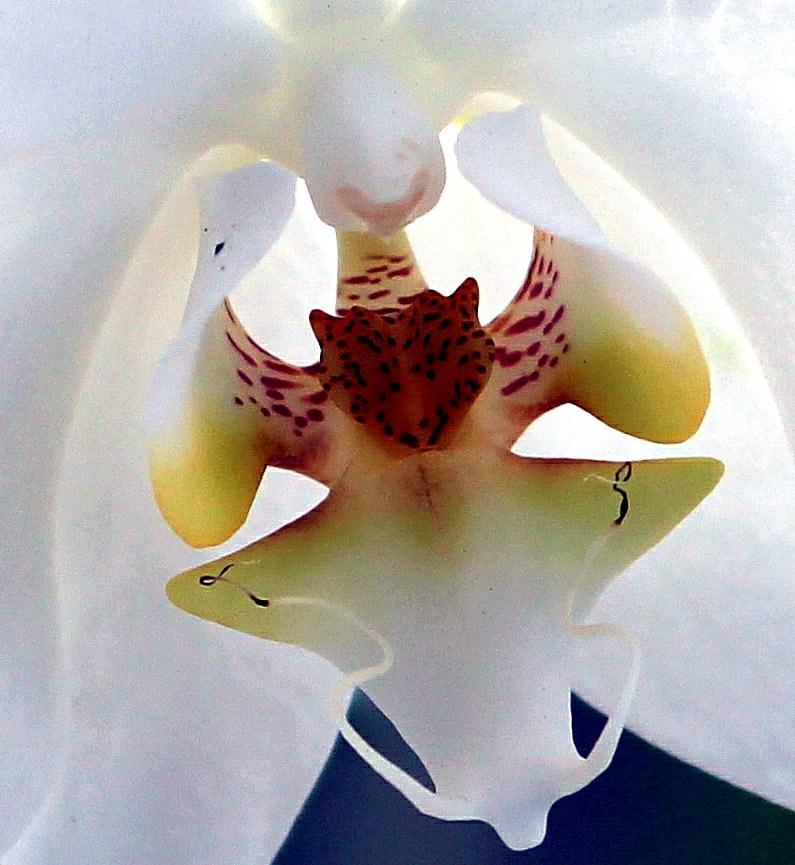 wpid-orquidea-detalle.jpg.jpeg