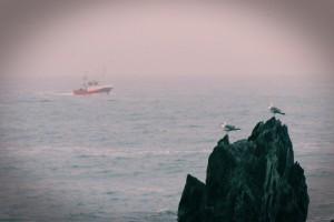Costa barco pesca gaviota roca Asturias mar cantábrico