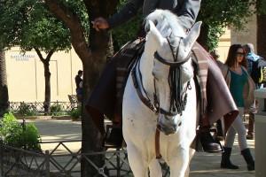 Caballo y jinete Caballerizas Reales Córdoba