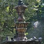 Palomas en fuente Parque San Lazaro Orense con salpicaduras