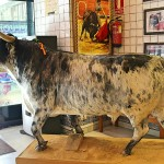 Toro de lidia disecado en bar taurino Carrera de San Jerónimo Madrid