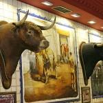 Toros de lidia disecados en bar taurino Carrera de San Jerónimo Madrid