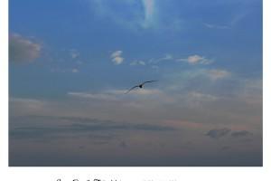 Gaviota volando en el cielo – Foto Manuel Ramallo