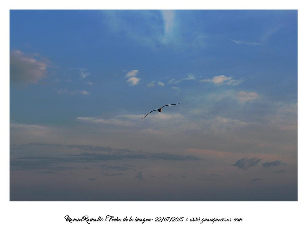 Gaviota volando en el cielo - Foto Manuel Ramallo