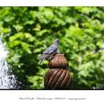 Fuente paloma parque San Lázaro Orense chorros agua – Imagen: Manuel Ramallo