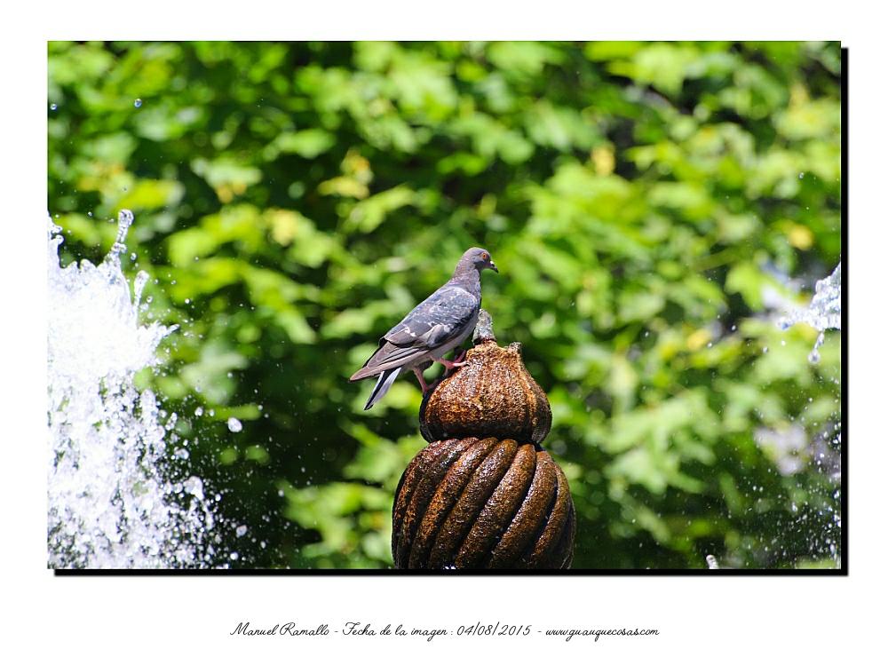 Fuente paloma parque San Lázaro Orense chorros agua - Imagen: Manuel Ramallo