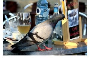 Paloma leyendo la carta de tapas de un bar