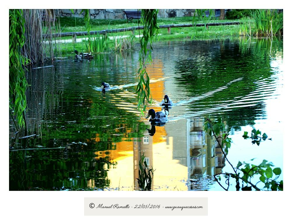 Patos en la charca con reflejos de la ciudad - Imagen: Manuel Ramallo