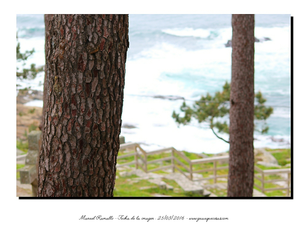 Pinos al borde del mar en La Virgen de la Roca - Imagen: Manuel Ramallo