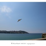 Gaviota vuela sobre la playa del Orzán A Coruña – Imagen: Manuel Ramallo