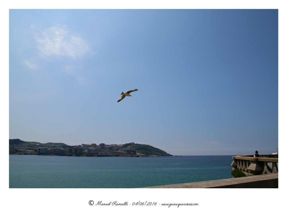 Gaviota vuela sobre la playa del Orzán A Coruña - Imagen: Manuel Ramallo