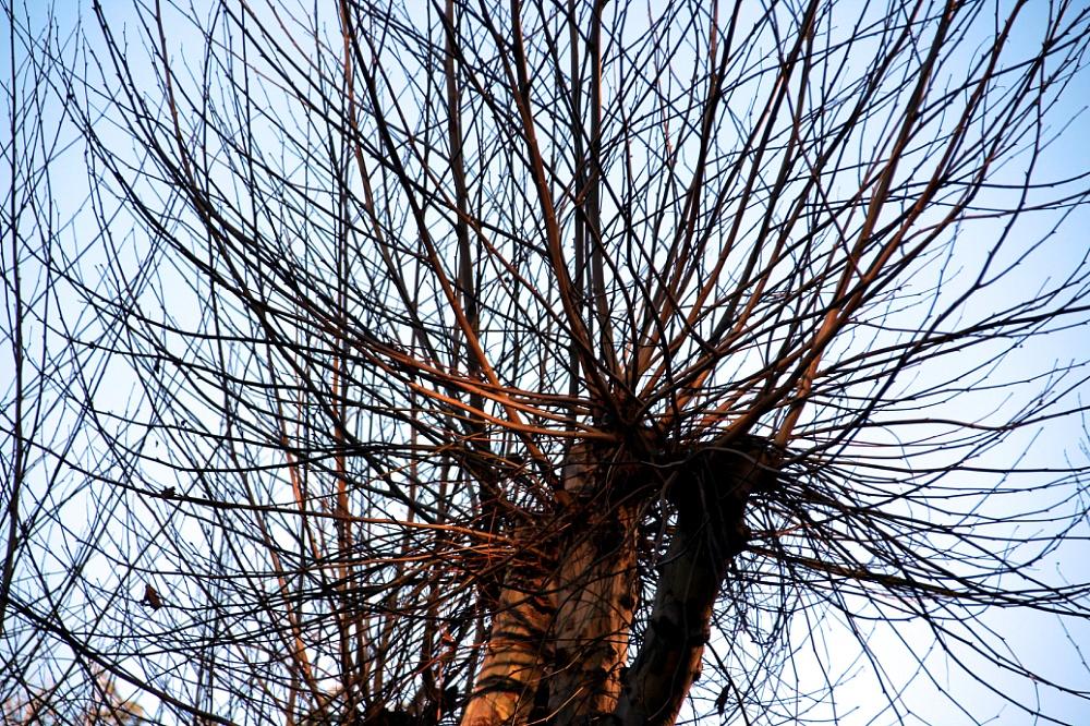 Invierno-en-el-parque-de-San-Lázaro