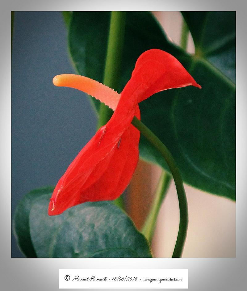 Flor de interior en una residencia geriátrica
