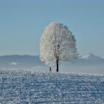Árbol nevado con montañas cubiertas de nieve al fondo