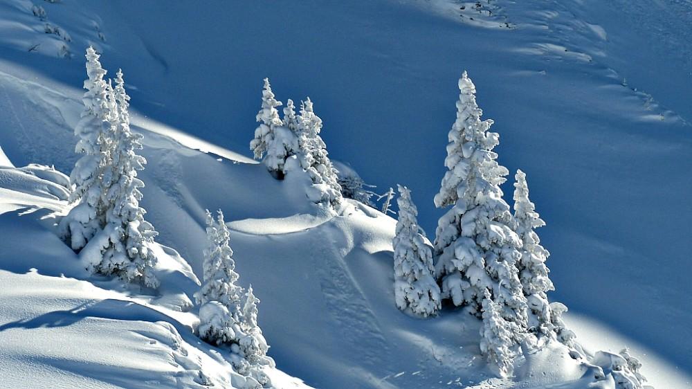 Árboles nevados en la alta montaña