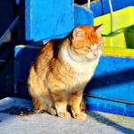 Gato rubio en la cubierta de barco de pesca de Portonovo Sanxenxo Pontevedra