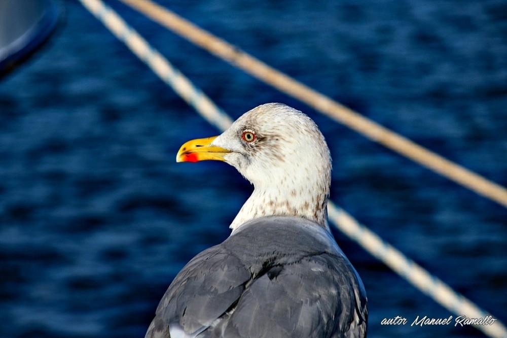 Gaviota en el muelle del puerto pesquero