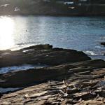Grupo de aves marinas en las rocas de la costa en Portonovo Sanxenxo Pontevedra