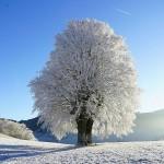 Árbol en campo totalmente nevado – Pixabay