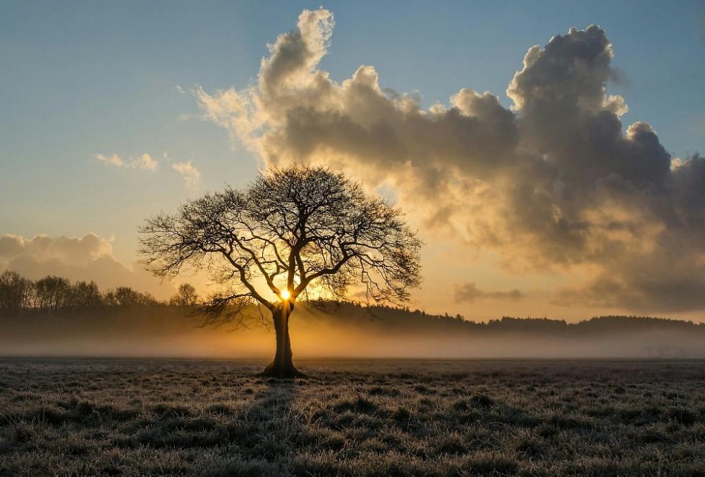 Árbol solitario en el atardecer