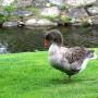 Parque Monforte Río Cabe ave palmípeda pico pato